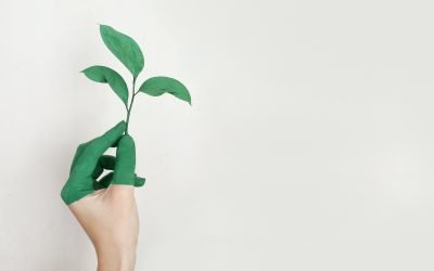 Why You Should Choose Green Certified Cleaning