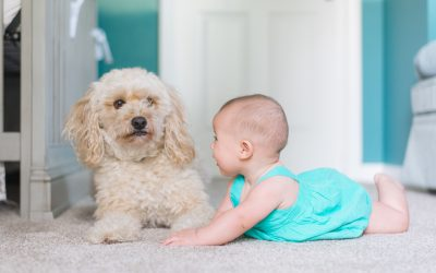 How Often Do You Need Professional Carpet Cleaning?